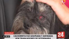 Dueña de cachorra denuncia maltrato animal en una veterinaria de Surquillo | VIDEO